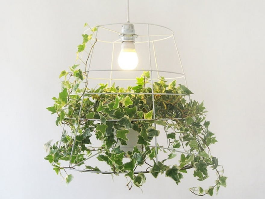 Meirav Barzilayによって光合成ランプ