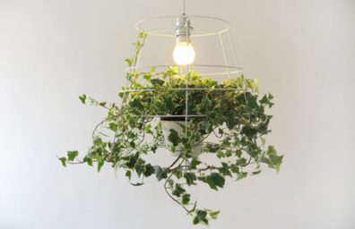 lampada Fotosintesi, Meirav Barzilay