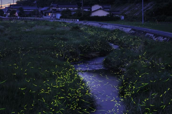 tsuneaki_hiramatsu_5