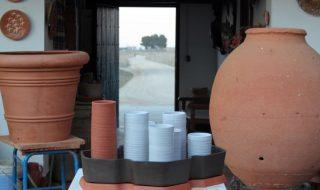 cactus-alberto-gorgojo-1
