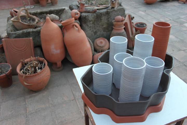 cactus-alberto-gorgojo-2
