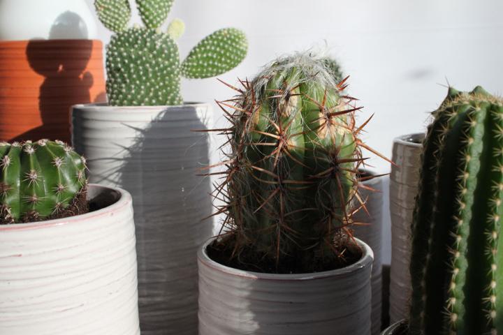 cactus-alberto-gorgojo-6