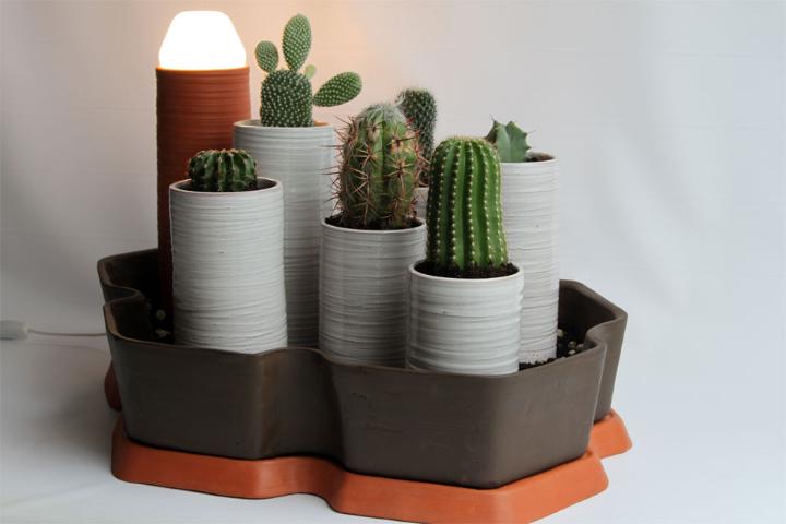 cactus-alberto-gorgojo-9