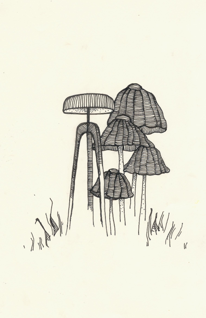 PILEO sketch