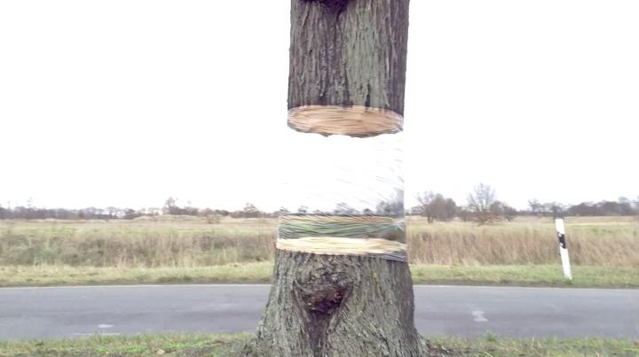 árbol suspendido-Daniel-Siering-Mario-Shu