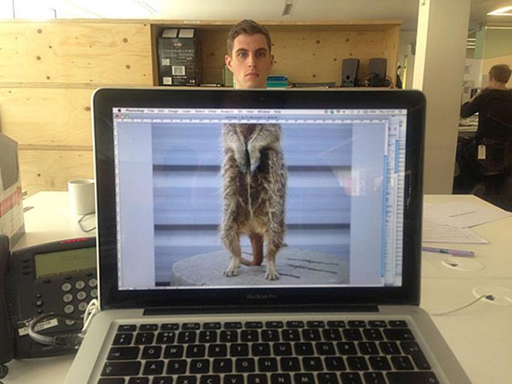 社会的な動物オフィスデザイン雑誌12