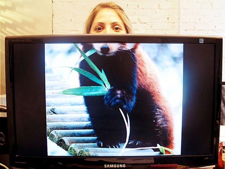 社会的な動物オフィスデザイン雑誌13