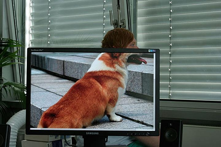 animaux sociaux conception des bureaux le magazine 14