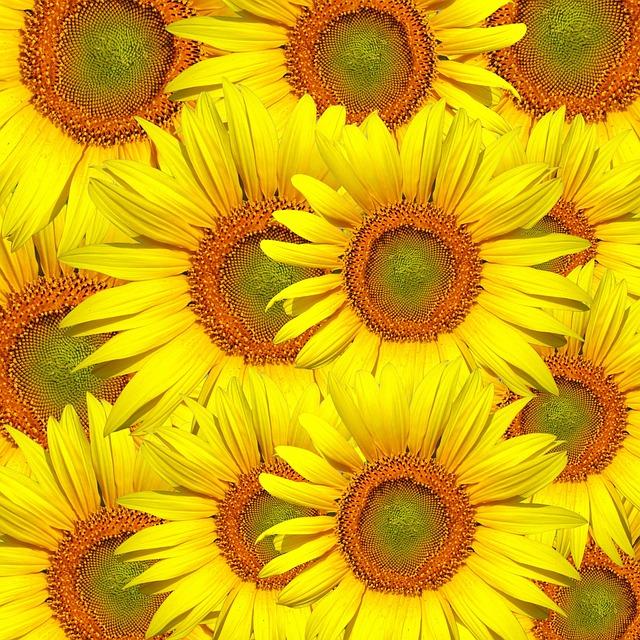 myflora_fiori_online