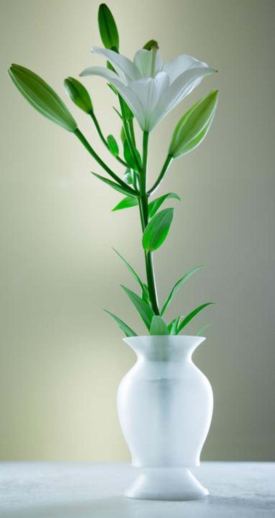 Vasi da fiori 3d printed anomaliy2 by inkinch 03