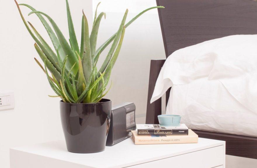 L aloe vera la pianta perfetta da coltivare in casa for Piante ideali per camera da letto