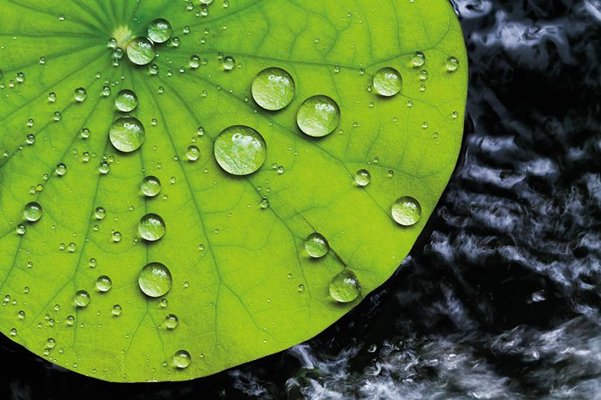 Alma Σχεδιασμός και Nanobiotech, το νερό-πετρέλαιο-απωθητικές