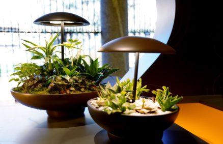 Jardim: o abajur com um mini-jardim
