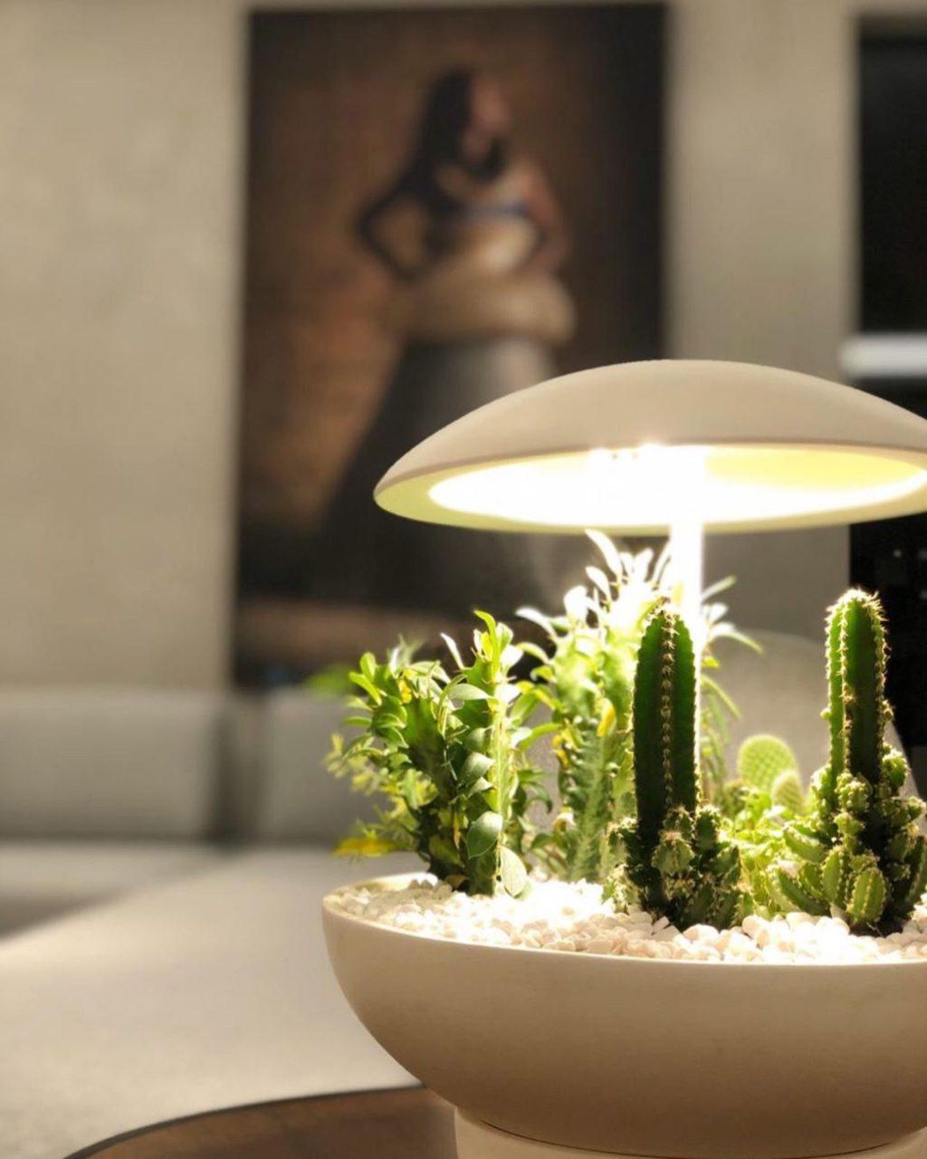 Градина: столна ламба со мини градина